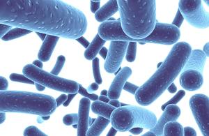 Probiotica bacteriën blaasontsteking